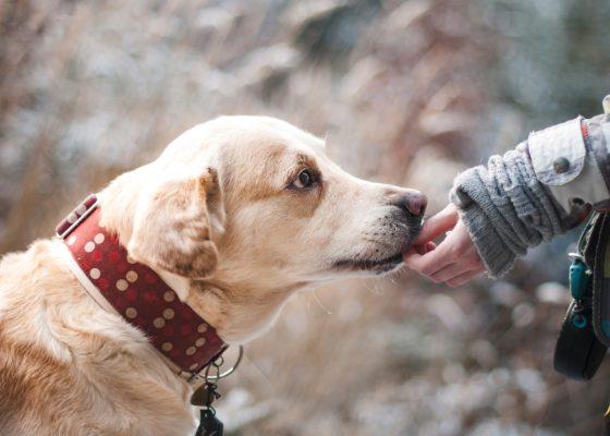 13 clinici veterinare din Bucureşti