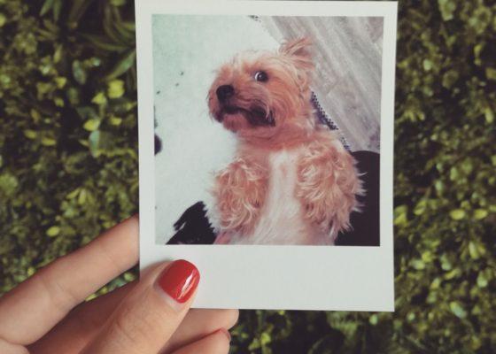 Instantly.be, locul unde îți poți printa fotografiile de pe Instagram (1)